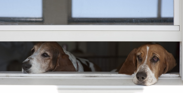 Dogs look out open window with no window covering in San Diego.